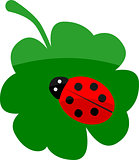 Lady bug on clover
