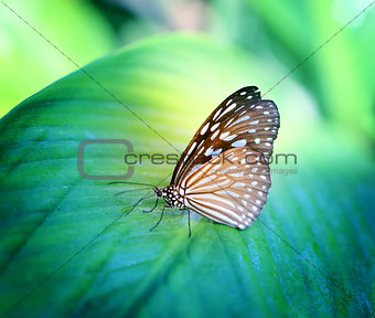 Bright photo of a butterfly exotic illuminated