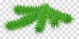 Lush green fir pine branch on transparent background