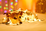 christmas dog with fairy lights