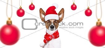 dog on christmas holidays