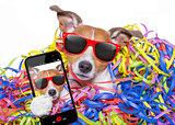 party celebration dog