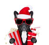 dot at the movies  on christmas holidays