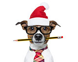 dog office worker on christmas holidays