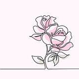 Drawing of beautiful pink rose flower