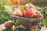 Fresh ripe apples in the basket.
