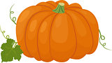 Orange pumpkin vector illustration. Autumn vegetable