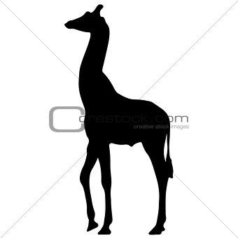 black silhouette of a giraffe. isolated vector illustration