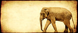 Grunge background with paper texture and walking elephant