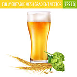 Glass of beer and hops on white background. Vector illustration
