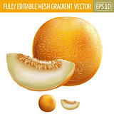 Melon on white background. Vector illustration