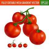 Cherry tomatoes on white background. Vector illustration