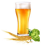 Glass of beer and hops on white background