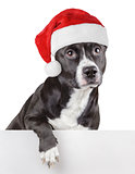 Black dog with Santa Claus or christmas red hat leaning on panel