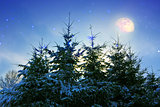 Winter landscape with snow covered fir trees and moon.