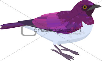 Amethyst Starling vector illustration