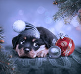 dog with christmas background