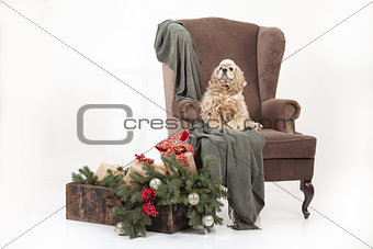 Little Fuffy Dog On A Big Armchair