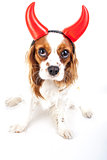Devil dog illustration. King charles spaniel with devil hat. Evil dog. Carnival evil costume. New Year's Eve. Devil sign symbol party masquerade. Sylvester cute spaniel dog wear devil horn