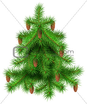 Green christmas fir pine tree with cones