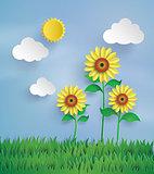 Sun flower in the field.