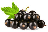 Black currant with leaves isolated on white background