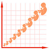 Human Fetus Growth Chart