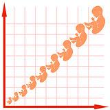 Human Fetus Growth Chart