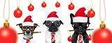 dogs on christmas holidays