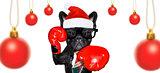 dog on christmas holidays