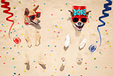 happy new year dogs at the beach