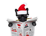 dog  reading newspaper on christmas holidays