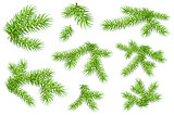 Set of green fluffy fir pine branches isolated on white background
