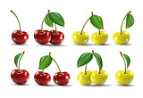 Big collection of photo-realistic vector illustration of ripe and yellow cherries.