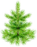 Green small Christmas pine fir tree