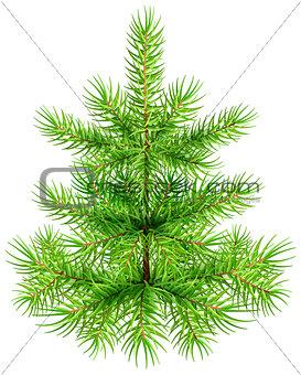 Green small Christmas pine fir tree