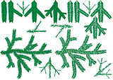 Coniferous Branch Collection