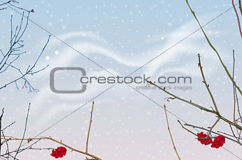 Red berries and branches of mountain ash on background of winter sky. Snowfall winter sky landscape