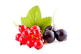 Red and black currants on white