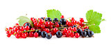 Red and black currants on white panoramic