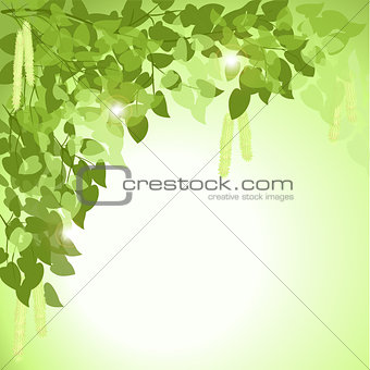 green background: branch of a birch tree