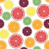 Vector Illustration with citrus oranges, lemons, grapefruits, limes and tangerines rings