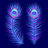 Peacock feathers on dark blue background
