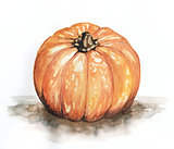 Pumpking watercolor illustration painting