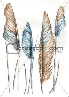 Watercolor illustration of bird feathers