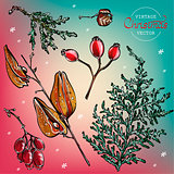 Vintage Christmas herbs vector watercolor