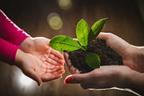 Mother's hand giving young tree to a child for planting together in green nature background