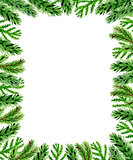 Christmas floral background with fir branch
