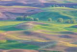 Sunlit rolling hills of farmland of Palouse region of Washington State America from Steptoe Butte in Spring