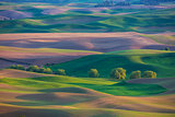 Wheat fields and rolling hills of the Palouse region of Washington State United States of America from Steptoe Butte